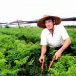 Embrapa sugere marco regulatório voltado para a economia verde